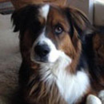 Avista Foundation Therapy Dogs Centura Health